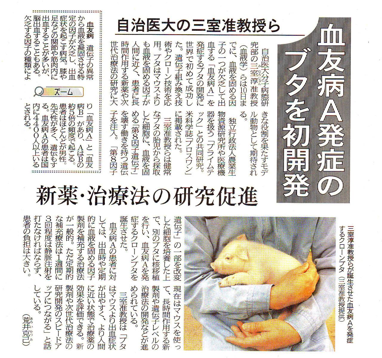 当院の三室淳先生が世界で初めて血友病A発症のブタを開発しました。