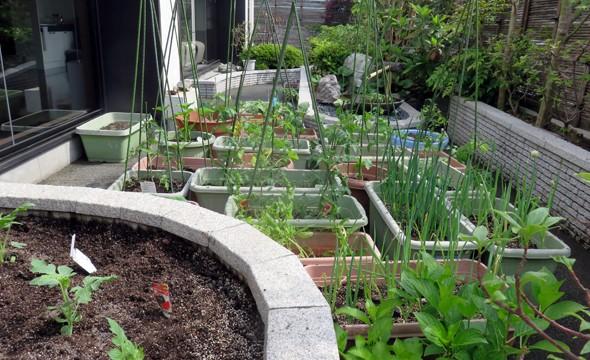 夏野菜の苗植え付けをおこないました。