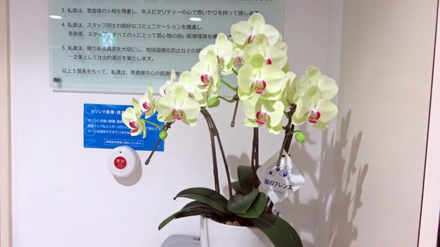 玄関の花 フォーチュンザルツマン(蘭)